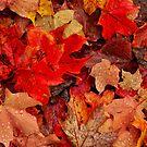 Leafy Carpet by Nancy Barrett