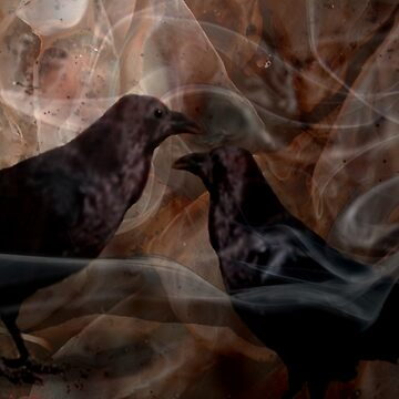 crows by sbc7