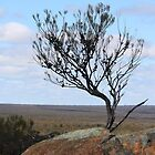 Tree at Buntine Rocks Dalwallinu by kalaryder