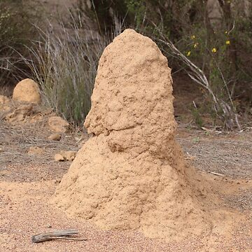 Termite Mound Canna by kalaryder