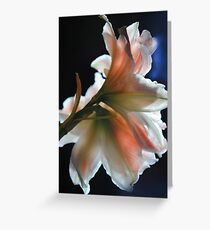 Amaryllis In The Light Greeting Card