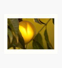 a golden apple in sunny paradise Art Print