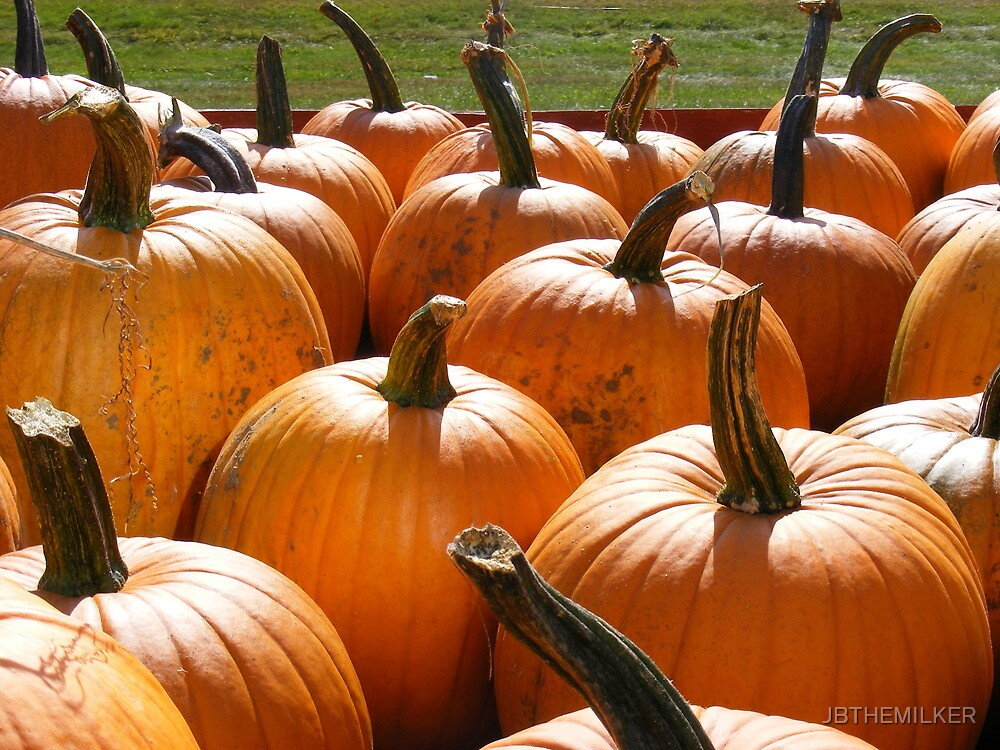 Harvest pumpkins by JBTHEMILKER