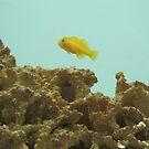Yellow fish in the sea by Wijzermetirene
