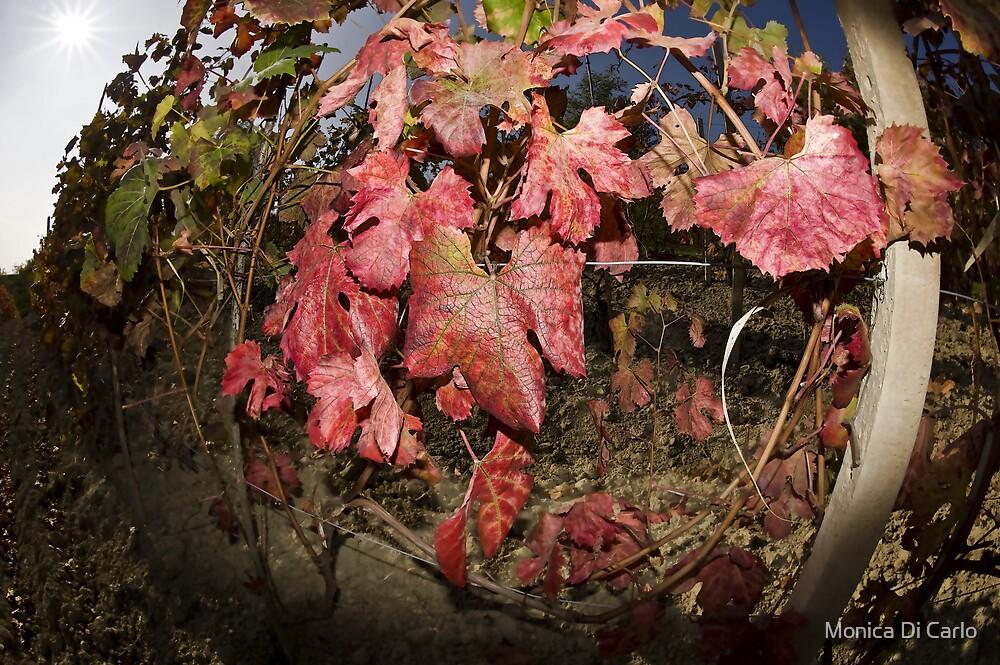 Autumn in Italy by Monica Di Carlo