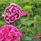 Pink Flowers by Wijzermetirene