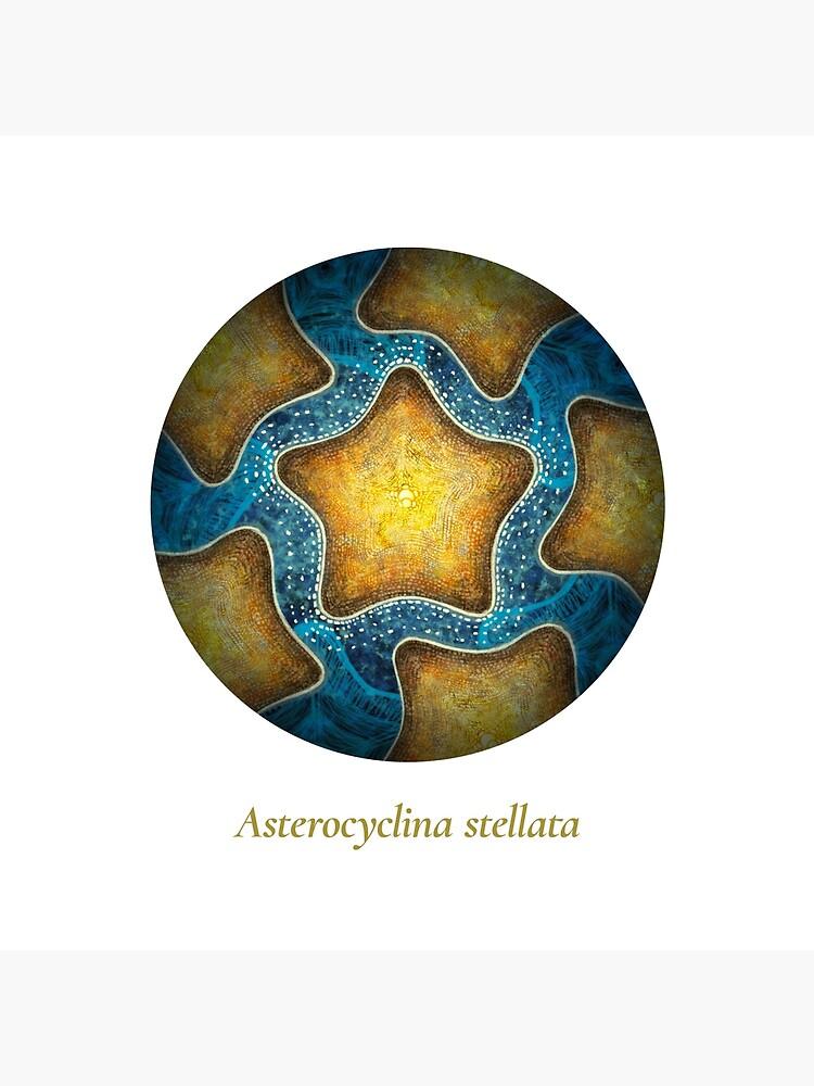 The Circles of Life: Asterocyclina stellata by franzanth
