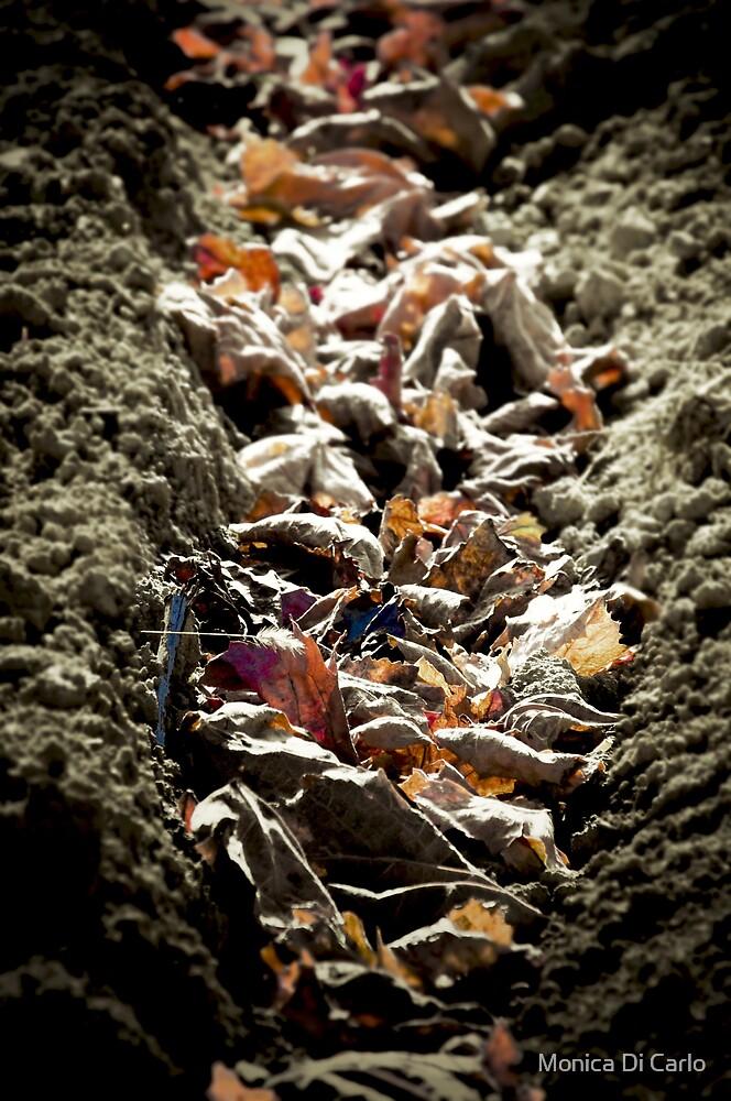 autumn leaves by Monica Di Carlo