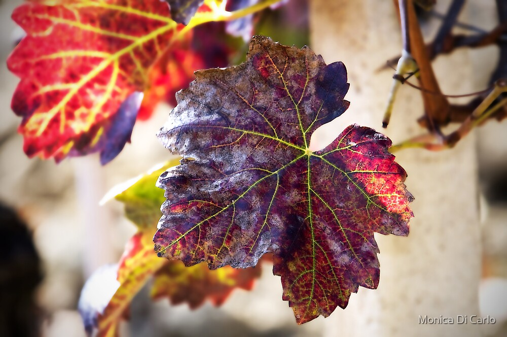 Autumn leave by Monica Di Carlo