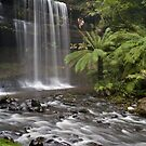 Russel Falls by Chris Putnam