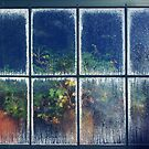 The Hothouse Window by Heather Thorsen