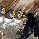 Grubs Up Holy Swallows by RicheRifkind