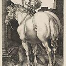 Large War Horse by Albrecht Dürer, 1505 by edsimoneit