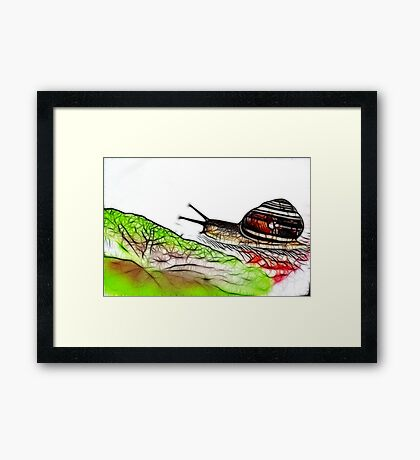 Snail & Letuce Framed Print