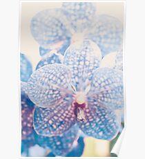 Résumé d'orchidée Poster