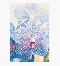 Résumé d'orchidée Impression photo