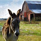 Hargroves' Mule by WildestArt