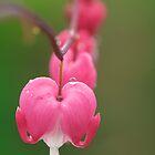 Bleeding Heart by Sarah-Jane Covey