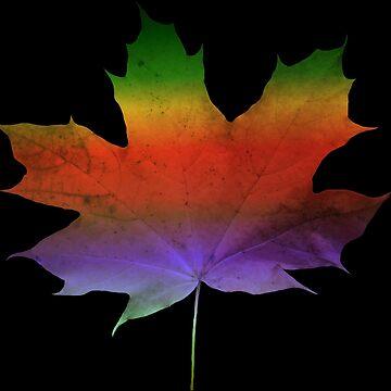 wonderful, colorful maple - leaf, autumn, tree, season, rainbow by rhnaturestyles
