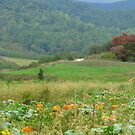 Country Pumpkins by Ginny York