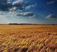 barley fields by Heath Dreger