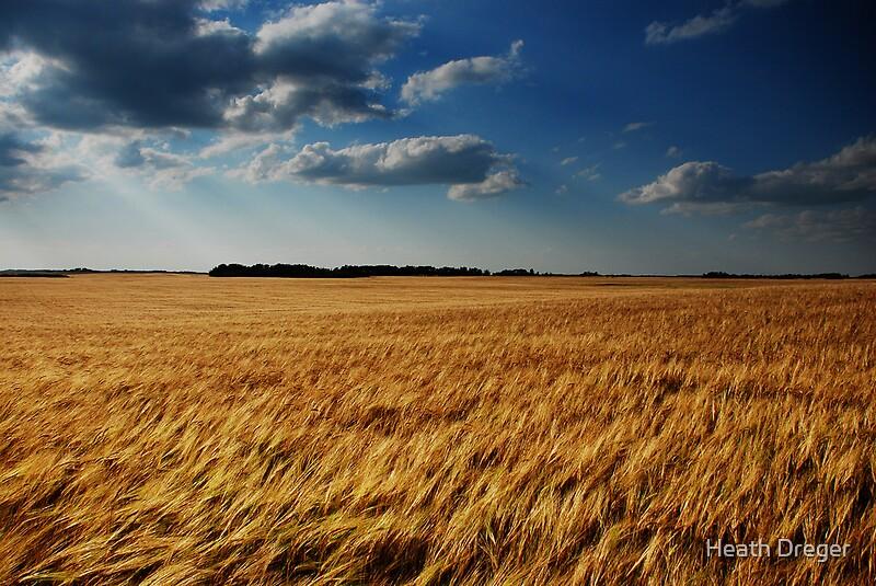 barley fields by nitrok-#13