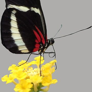 magical butterfly on a yellow flower, insect, nature by rhnaturestyles