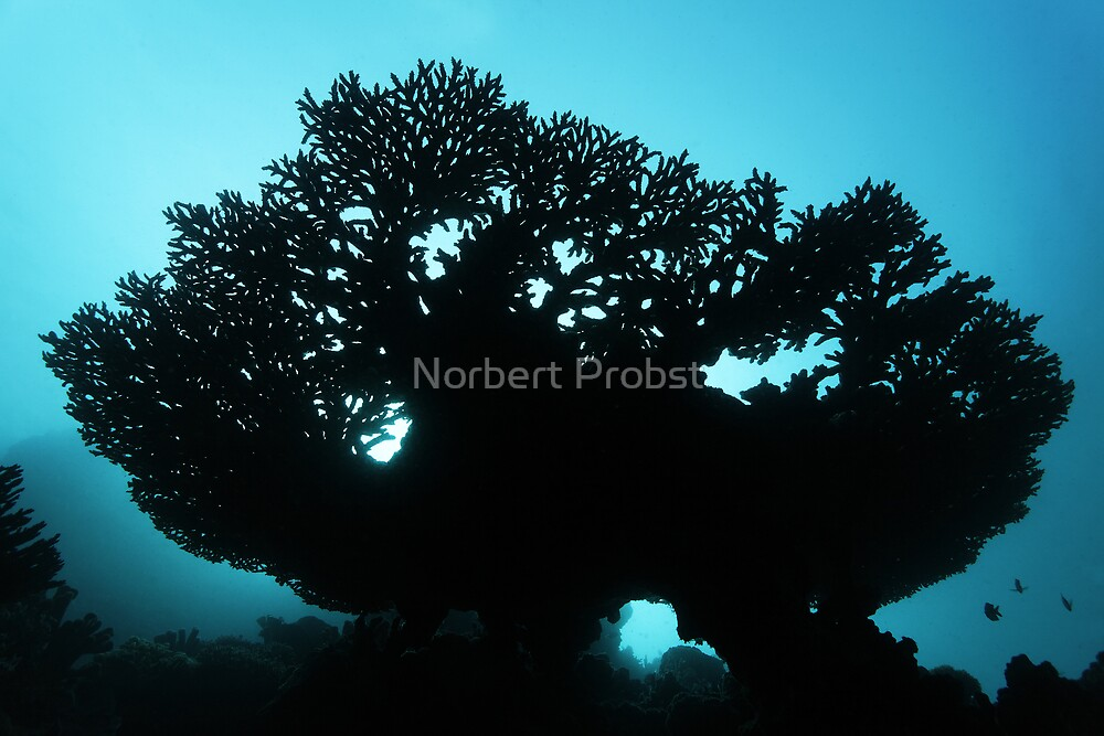 Into Light by Norbert Probst