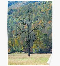Dreaming  Tree, Catalooche, GSMNP Poster