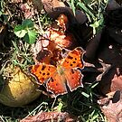 Pretty Butterfly with Pears by little1sandra