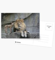 The Lion and The Lamb Postcards