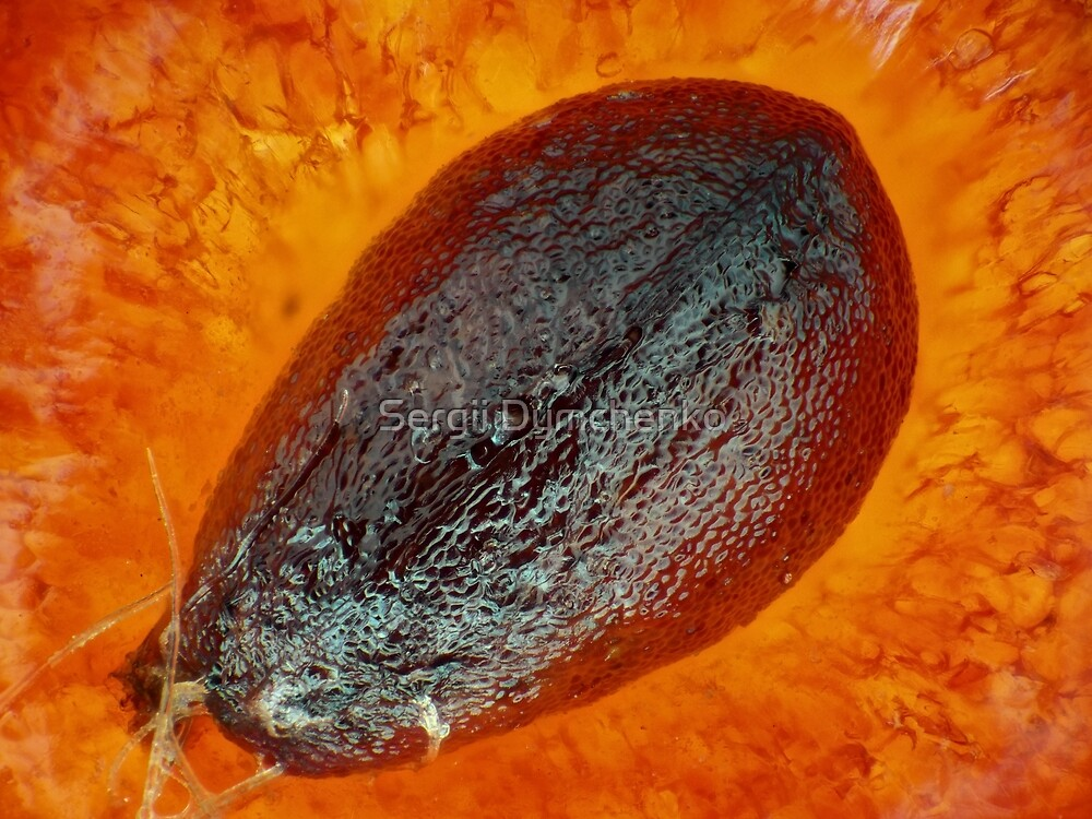 "Strawberry ""seed"" (achene) under the microscope by Sergii Dymchenko"