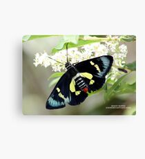 Regent Skipper Canvas Print