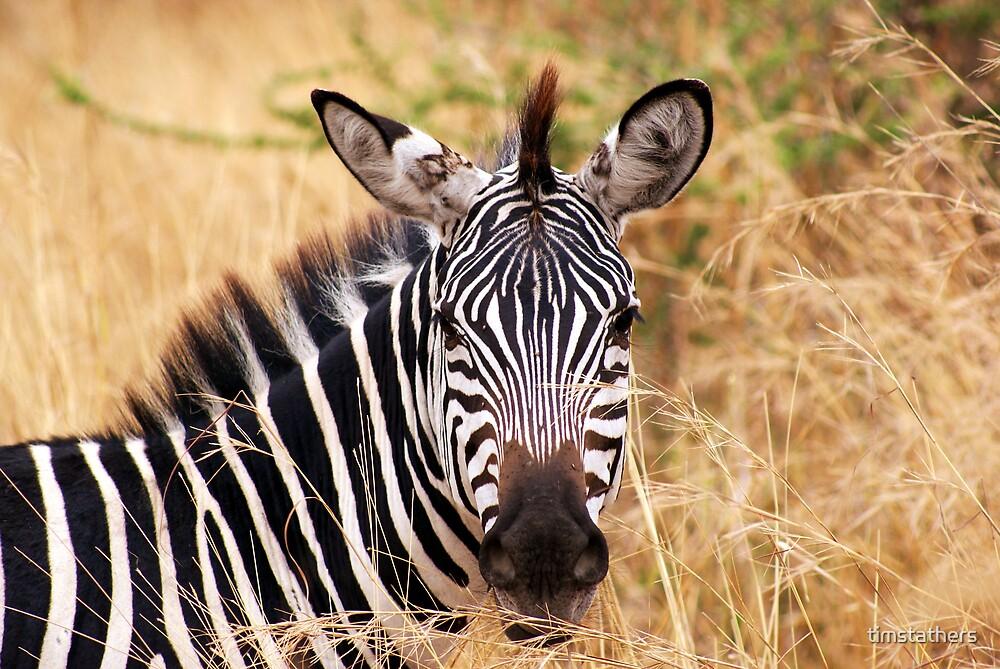 Zebra - Tarangiri National Park, Tanzania by timstathers
