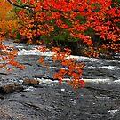 Oxtongue River Rapids by Nancy Barrett