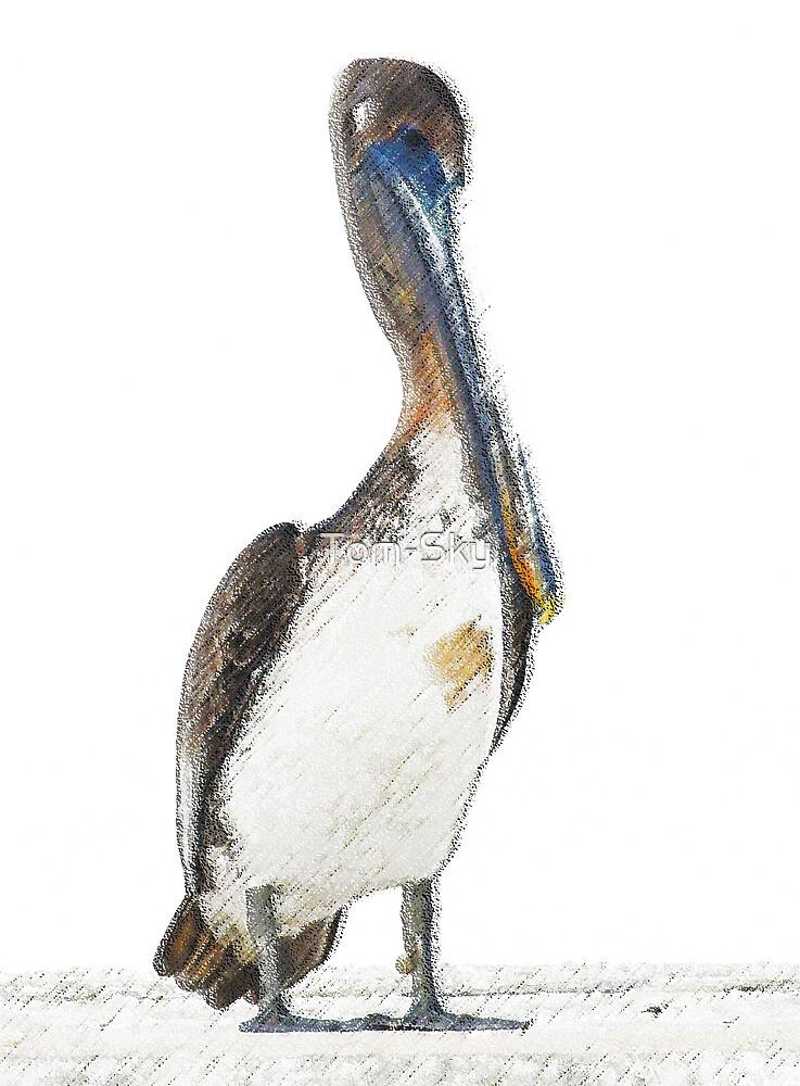 Pelican by Tom-Sky