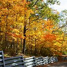 Autumn Drive by Rachel Stickney