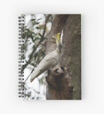 Sulphur-crested cockatoo looking at the camera Spiral Notebook