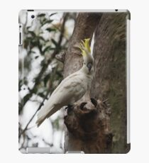 Sulphur-crested cockatoo looking at the camera iPad Case/Skin