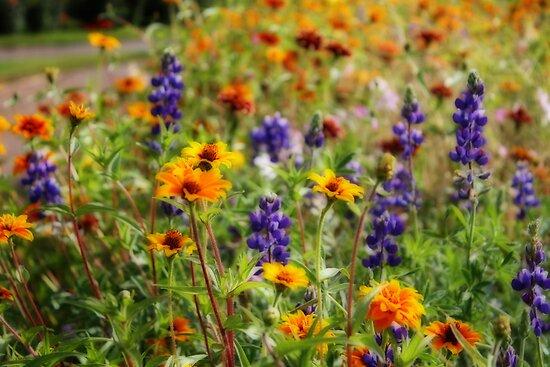 WIldflowers von Chappy