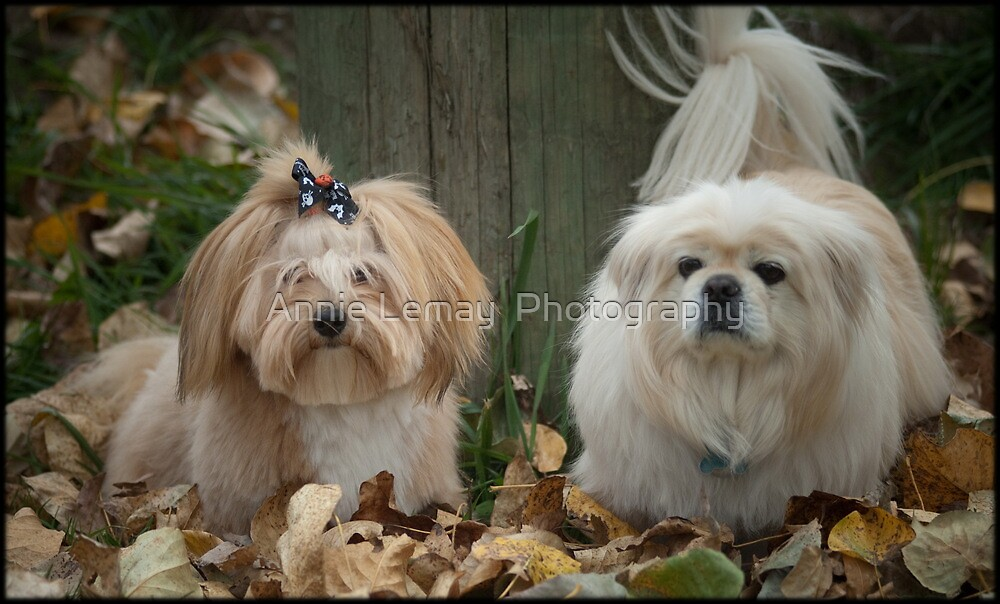 Happy Holloween  by Annie Lemay  Photography