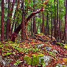 Gulf Islands Woods in the Fall - Panorama by toby snelgrove  IPA