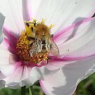cosmos and bee by jamluc