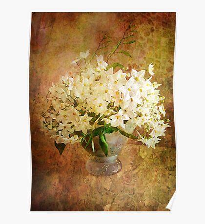Jasmine in a Vase  Poster