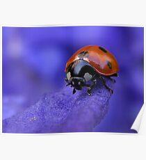 Purple Lady Poster