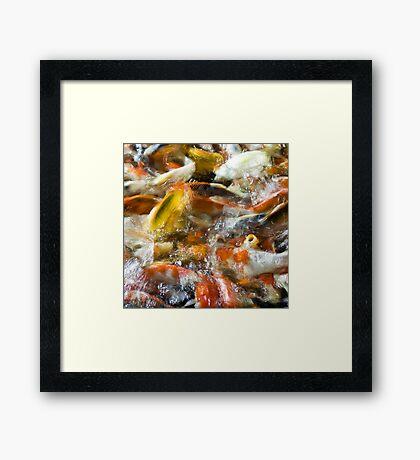 Koi Pond 1 Framed Print