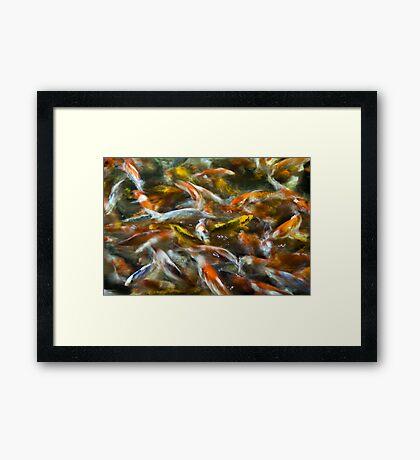 Koi Pond 2 Framed Print