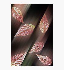 Autumn Leaves - Lochwinnoch Scotland Photographic Print
