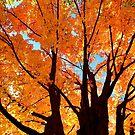 """""""Autumn Trees"""" by Colette  Larson"""