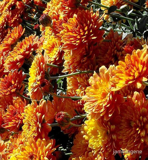 An Orange fall view by jammingene